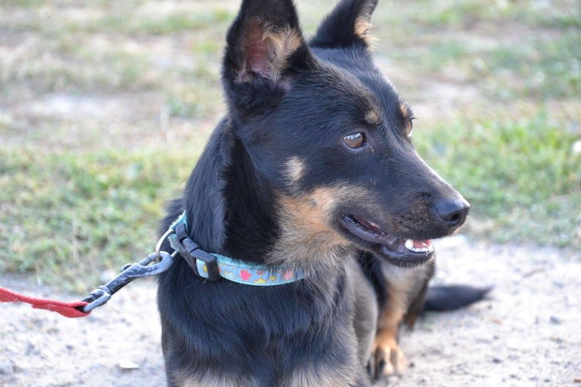 pies - Międzygminne Schronisko dla Bezdomnych Zwierząt w Wysocku Wielkim