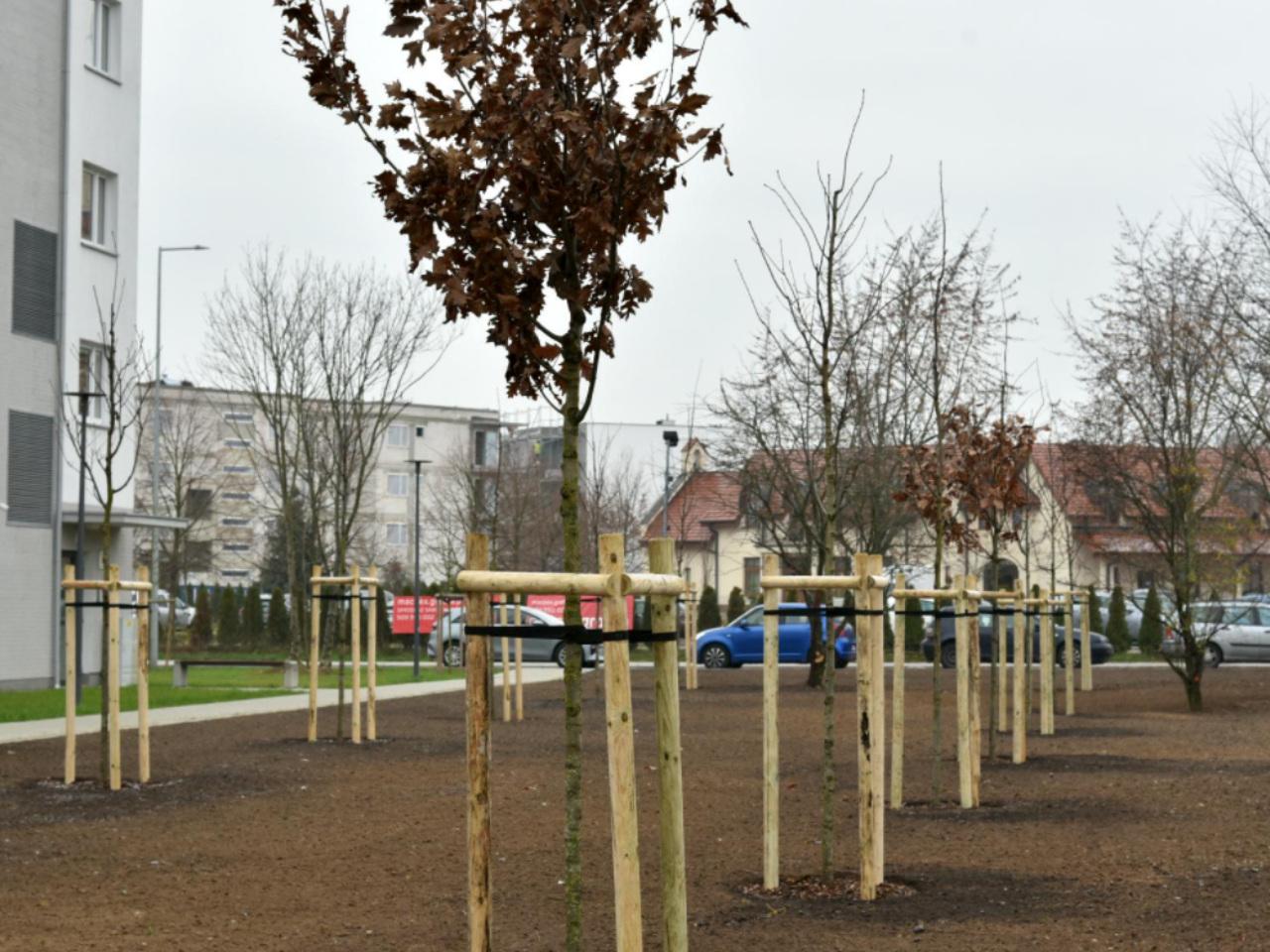 drzewa ławica strzeszyn - Miasto Poznań