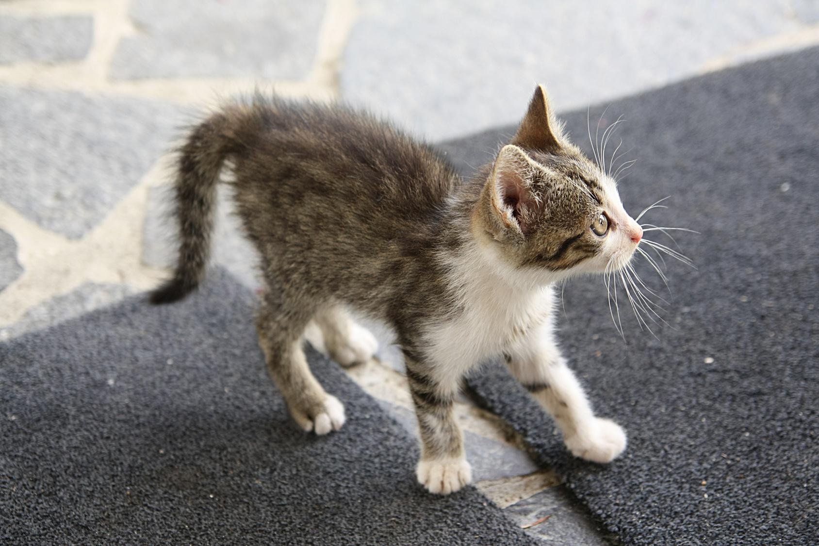 Kot dachowiec - Szymon Mazur