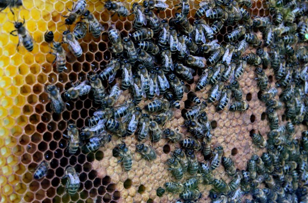 dzień pszczoły - Anna Adamczyk