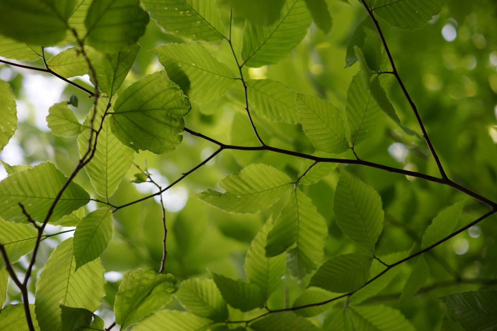 olcha drzewa liście ptaki wszystkie - Fotolia