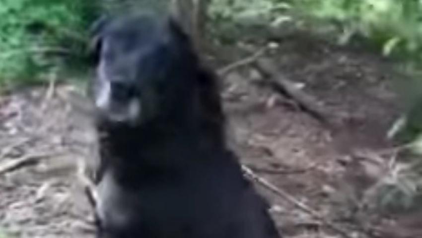 pies ostrów porzucony szymon j - Schronisko Ostrów Wlkp.