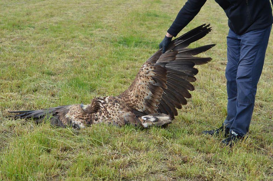martwe ptaki wielowieś krotoszyn - Schronisko dla Zwierząt Krotoszyn