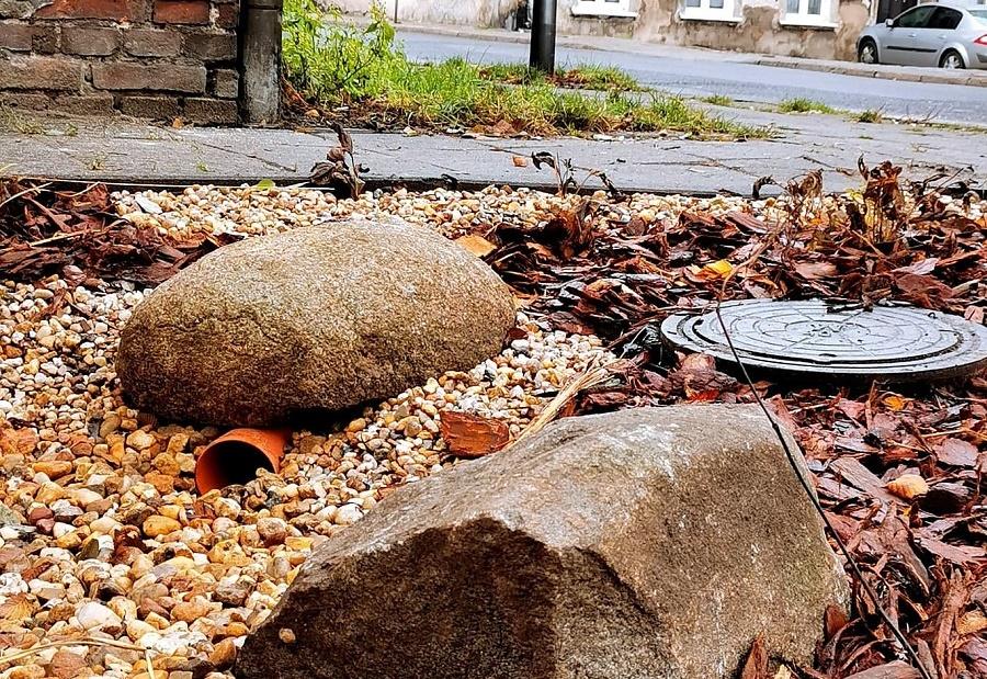 kalisz ogród deszczowy - www.kalisz.pl