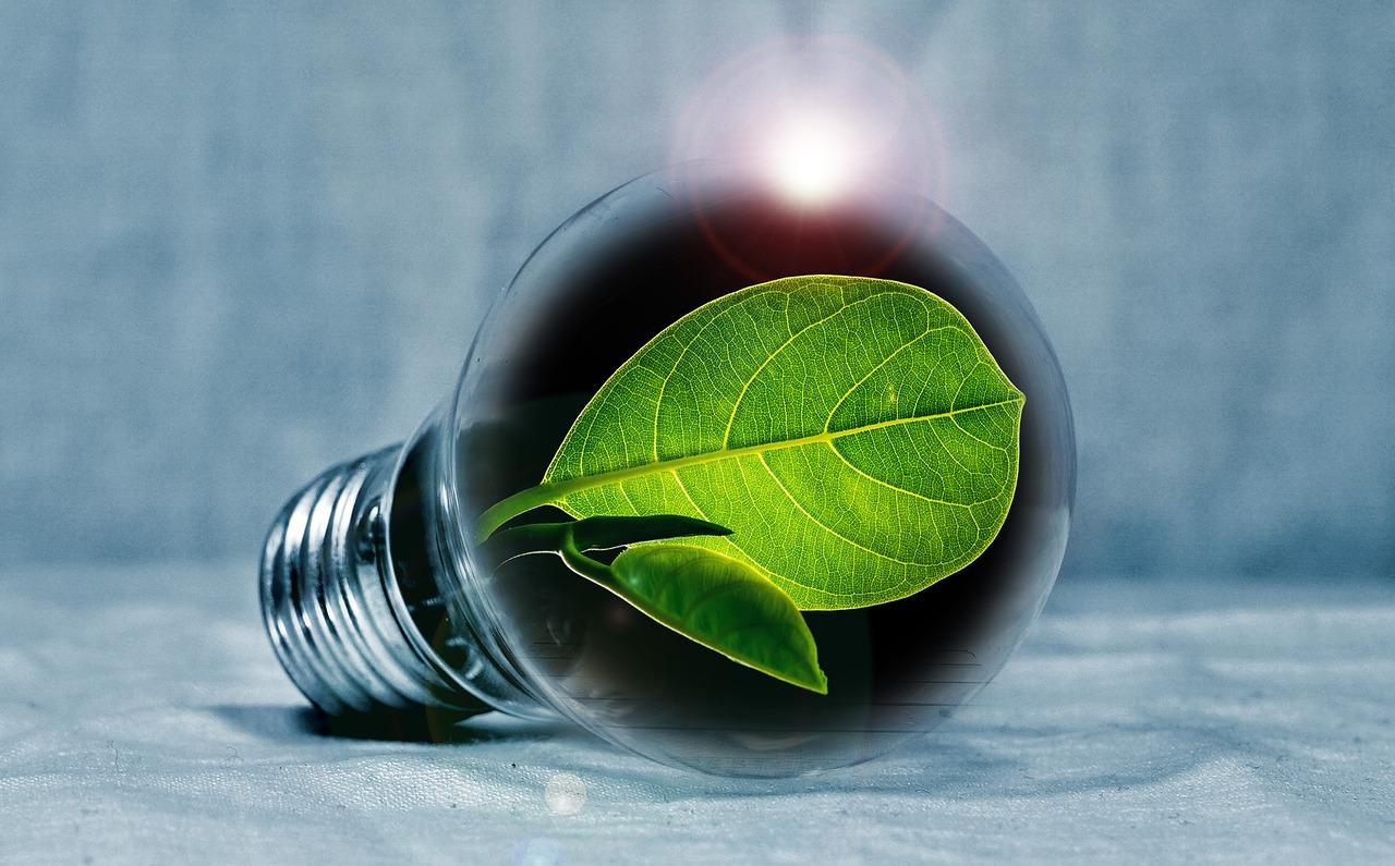 zielona energia stock ekologia - Pixabay