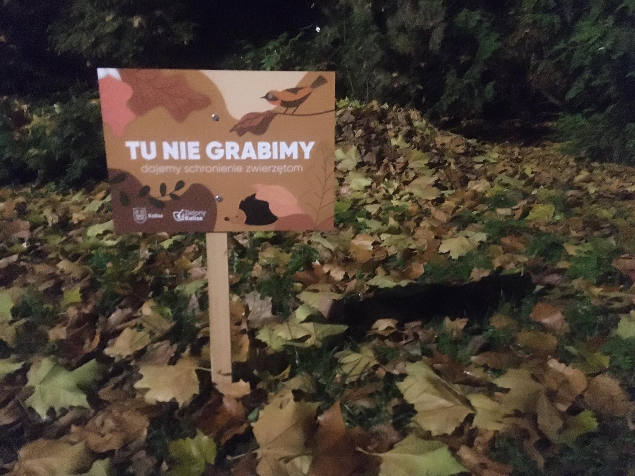 jeże w parku kalisz - Danuta Synkiewicz