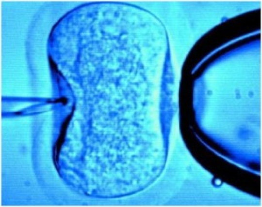 In vitro - In vitro