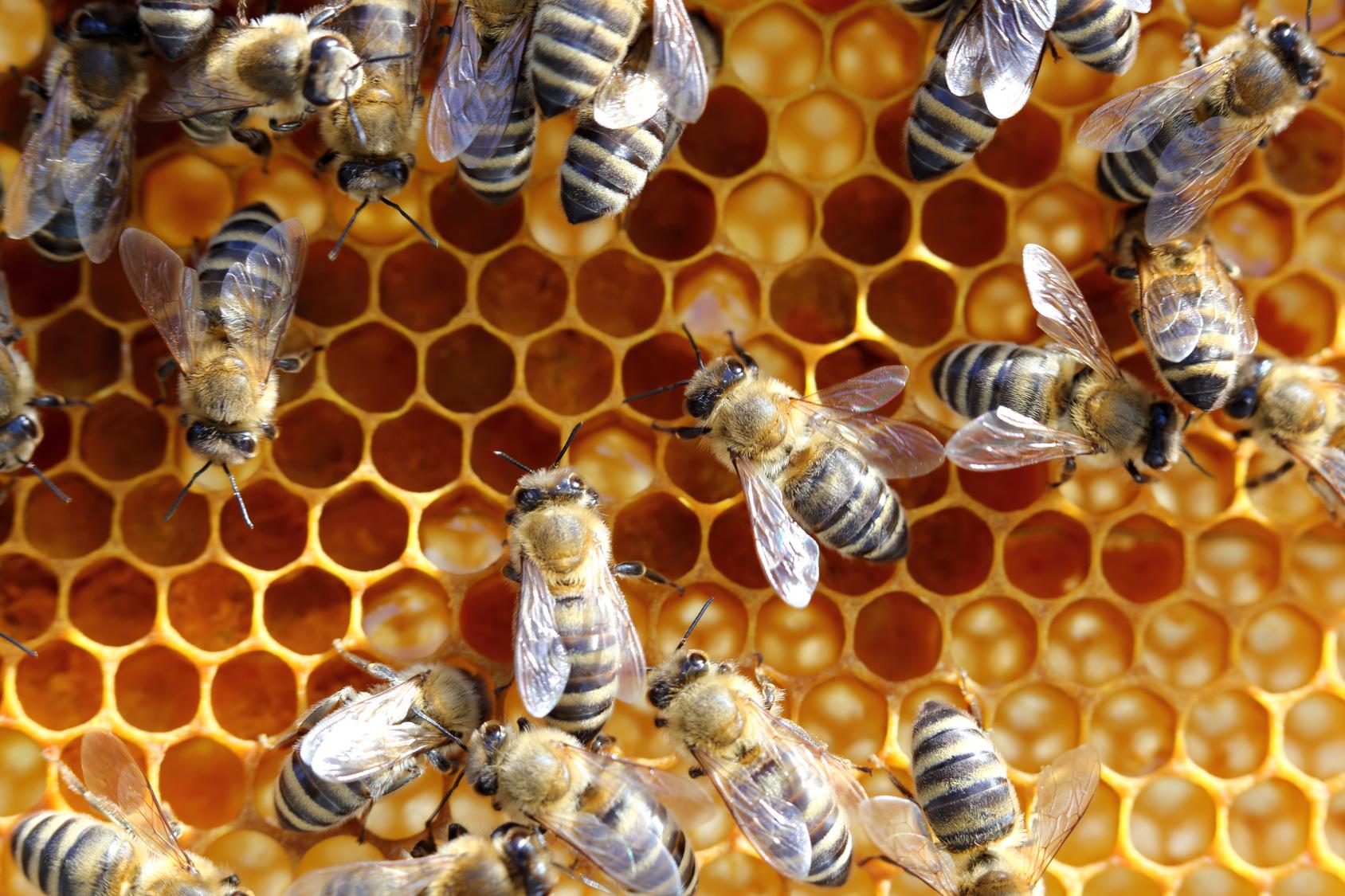 pszczoły - Szymon Mazur